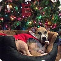 Adopt A Pet :: Elliot - Joliet, IL