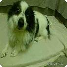 Adopt A Pet :: CO-CO