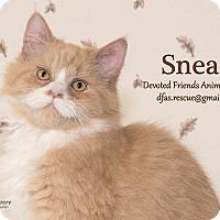 Adopt A Pet :: Snead - Ortonville, MI