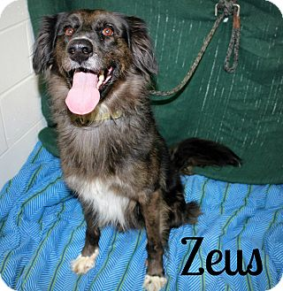 Catahoula Leopard Dog/Pointer Mix Dog for adoption in Melbourne, Kentucky - Zeus