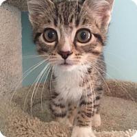 Adopt A Pet :: Victor - Gainesville, FL
