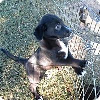 Adopt A Pet :: Tippy Toe ADOPTED - Waterbury, CT