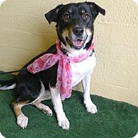 Adopt A Pet :: Janssen - Casa Grande, AZ