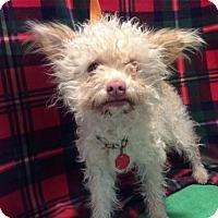 Adopt A Pet :: I1266991 - Pomona, CA