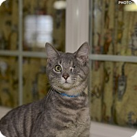 Adopt A Pet :: Pinta - Medina, OH
