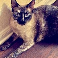 Adopt A Pet :: Nora - Austin, TX