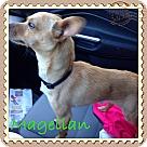 Adopt A Pet :: Magellan