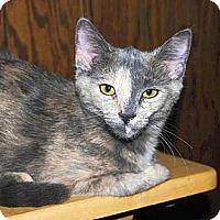Adopt A Pet :: Tootsie - Green Bay, WI