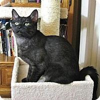Adopt A Pet :: Starla - Davis, CA