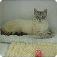 Adopt A Pet :: Sir Frankie - Columbus, OH