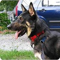 Adopt A Pet :: Marx - Pike Road, AL