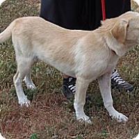 Adopt A Pet :: Dalila - Post, TX