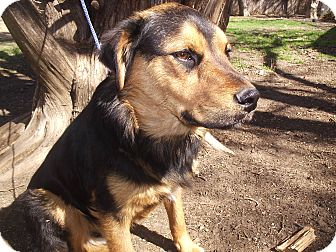 Australian Shepherd/Labrador Retriever Mix Dog for adoption in Dallas, Texas - Nala