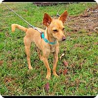 Adopt A Pet :: Jypsy - Charlemont, MA