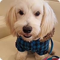 Adopt A Pet :: Snoopy - Buena Park, CA