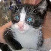 Adopt A Pet :: Ang - Island Park, NY