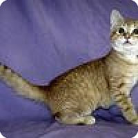 Adopt A Pet :: Evee - Powell, OH