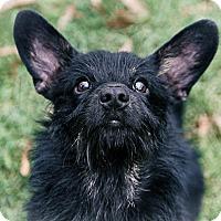 Adopt A Pet :: Lindy - Potomac, MD