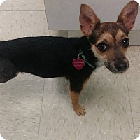 Adopt A Pet :: Maude the TriPod - Nashville, TN