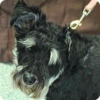 Adopt A Pet :: Heidi - Huntley, IL