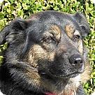 Adopt A Pet :: LuAnne