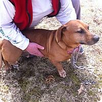 Adopt A Pet :: Sam - Shelter Island, NY