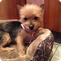 Adopt A Pet :: Nena - N. Babylon, NY