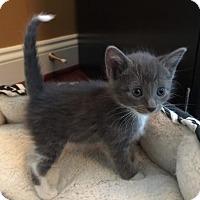 Adopt A Pet :: Rene - Herndon, VA