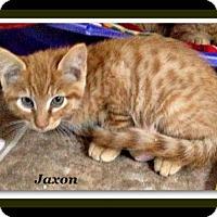 Adopt A Pet :: Jaxon - Tombstone, AZ
