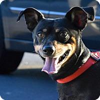 Adopt A Pet :: Tiny Tim - Meridian, ID