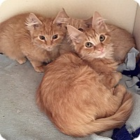 Adopt A Pet :: Petra - Duncan, BC