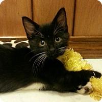Adopt A Pet :: ASICS - Jackson, MO
