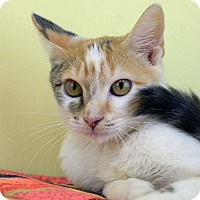 Adopt A Pet :: LORIBELLE - LAFAYETTE, LA