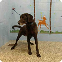 Labrador Retriever Mix Dog for adoption in San Bernardino, California - URGENT on 12/1 SAN BERNARDINO