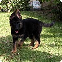 Adopt A Pet :: Kenya - Irvine, CA