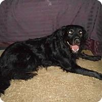 Adopt A Pet :: Bear - North Jackson, OH