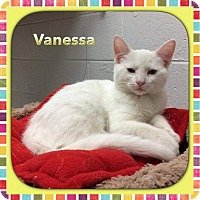 Adopt A Pet :: Vanessa - Atco, NJ