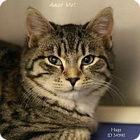 Adopt A Pet :: Hugs - Camden, DE