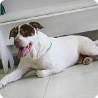 Adopt A Pet :: Tank - Yukon, OK