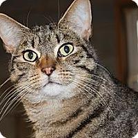 Adopt A Pet :: Bingo - Maxwelton, WV