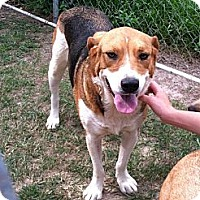 Hound (Unknown Type)/Beagle Mix Dog for adoption in Bay Springs, Mississippi - S406 Marty