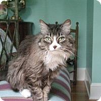 Adopt A Pet :: Seraphina - Monroe, NC