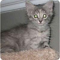 Adopt A Pet :: Bebe - Davis, CA
