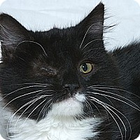 Adopt A Pet :: Little Jack - Sacramento, CA
