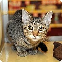 Adopt A Pet :: Theodore - Farmingdale, NY