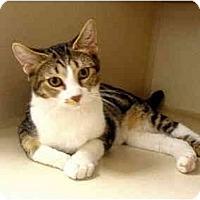 Adopt A Pet :: Fuji - Mesa, AZ