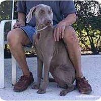 Adopt A Pet :: Gabbie **ADOPTED** - Eustis, FL