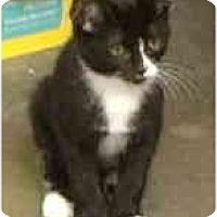 Adopt A Pet :: Charlie - Mesa, AZ