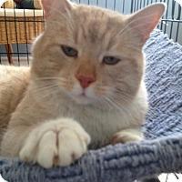 Adopt A Pet :: Homer - Caistor Centre, ON