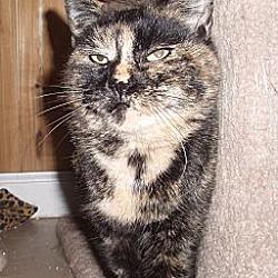 Photo 1 - Domestic Shorthair Cat for adoption in Germansville, Pennsylvania - Karina